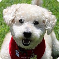 Adopt A Pet :: Kirby - La Costa, CA