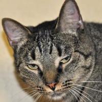 Adopt A Pet :: Lucy - Tilton, IL