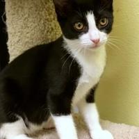 Adopt A Pet :: Malcom - Long Beach, CA