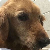 Adopt A Pet :: Mango - Denver, CO