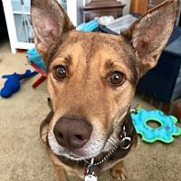 Adopt A Pet :: Kendra - Denver, CO