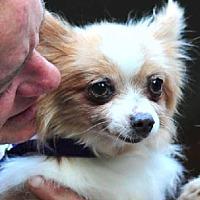Adopt A Pet :: Hansel - Vernonia, OR
