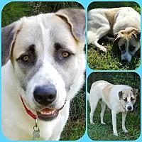 Adopt A Pet :: Slick - Newnan, GA