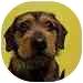 Labrador Retriever Dog for adoption in Portland, Oregon - Scooby
