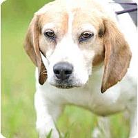 Adopt A Pet :: Oscar - Indianapolis, IN