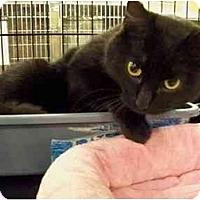 Adopt A Pet :: Smarty - Thousand Oaks, CA
