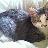 Adopt A Pet :: Cosmos - Modesto, CA
