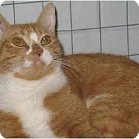 Adopt A Pet :: Lily - Mission, BC