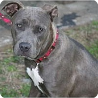 Adopt A Pet :: Lily - DFW, TX