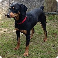 Adopt A Pet :: Katie - Sandston, VA
