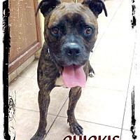 Adopt A Pet :: Chickie - Fenton, MI