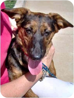 Dachshund/German Shepherd Dog Mix Dog for adoption in Inman, South Carolina - Gracie