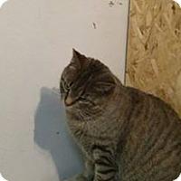 Adopt A Pet :: Diamond - Leamington, ON