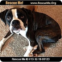 Adopt A Pet :: Bailey (courtesy listing) - Brentwood, TN