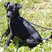 Adopt A Pet :: Gage(7 lb) New Pics & Video - SUSSEX, NJ