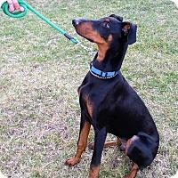 Adopt A Pet :: Drake - Arlington, VA