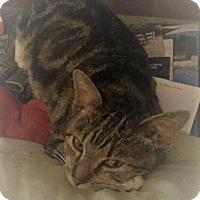 Adopt A Pet :: Grover - Manchester, CT