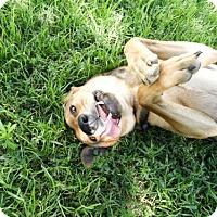 Adopt A Pet :: Nadja - Waco, TX