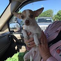 Adopt A Pet :: Buddy - Ardmore, OK
