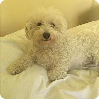 Adopt A Pet :: Rocky - Cedar, MN