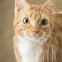 Adopt A Pet :: Macy - Waco, TX