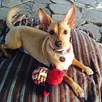 Adopt A Pet :: Leah - Santa Monica, CA