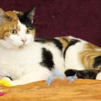 Adopt A Pet :: Bailey - Bristol, IN