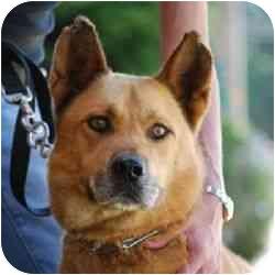 German Shepherd Dog Mix Dog for adoption in Berkeley, California - Dean