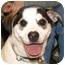 Photo 2 - Labrador Retriever/Husky Mix Dog for adoption in Kokomo, Indiana - JACK
