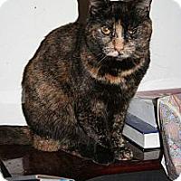 Adopt A Pet :: Miranda - Santa Rosa, CA
