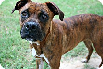 Boxer Mix Dog for adoption in Lufkin, Texas - Gypsy