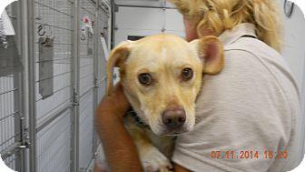 Dachshund Mix Dog for adoption in Sandusky, Ohio - TIDE