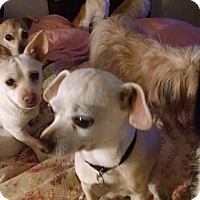 Adopt A Pet :: Cooper - Simi Valley, CA
