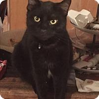 Adopt A Pet :: Jinxy - Kelso/Longview, WA