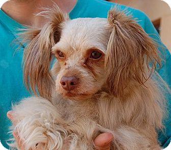Spaniel (Unknown Type) Mix Dog for adoption in Las Vegas, Nevada - Dior