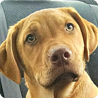 Adopt A Pet :: Dixon/Fin - Courtesy List - Oakley, CA