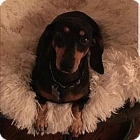 Adopt A Pet :: VIrgil - Decatur, GA