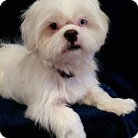 Adopt A Pet :: Dozer Turner - Urbana, OH