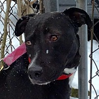 Labrador Retriever Mix Dog for adoption in Tenafly, New Jersey - French Fry