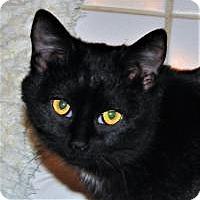 Adopt A Pet :: Houdini - Duluth, GA