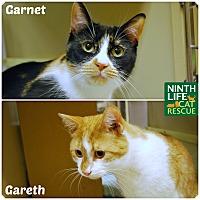 Adopt A Pet :: Gareth & Garnet - Oakville, ON