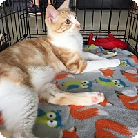Adopt A Pet :: Oregano - Hammond, LA
