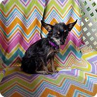 Adopt A Pet :: Estella - San Antonio, TX