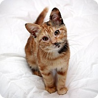 Adopt A Pet :: Flora & Pixel - San Antonio, TX