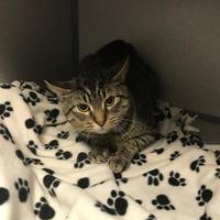 Adopt A Pet :: Andre - Fort Dodge, IA