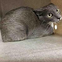 Adopt A Pet :: JORDYN - Ames, IA