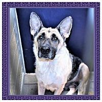 Adopt A Pet :: Dixie - San Jacinto, CA
