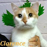 Adopt A Pet :: Clarence - El Cajon, CA