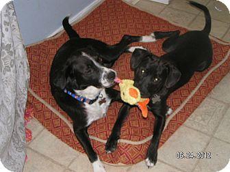 Labrador Retriever Mix Dog for adoption in Richmond, Virginia - Genie