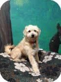 Terrier (Unknown Type, Medium) Mix Dog for adoption in Goleta, California - Darryl